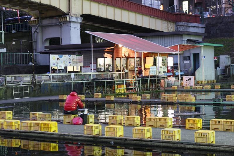 2009年01月08日 市ヶ谷フィッシュセンターで鯉釣りしてきました。