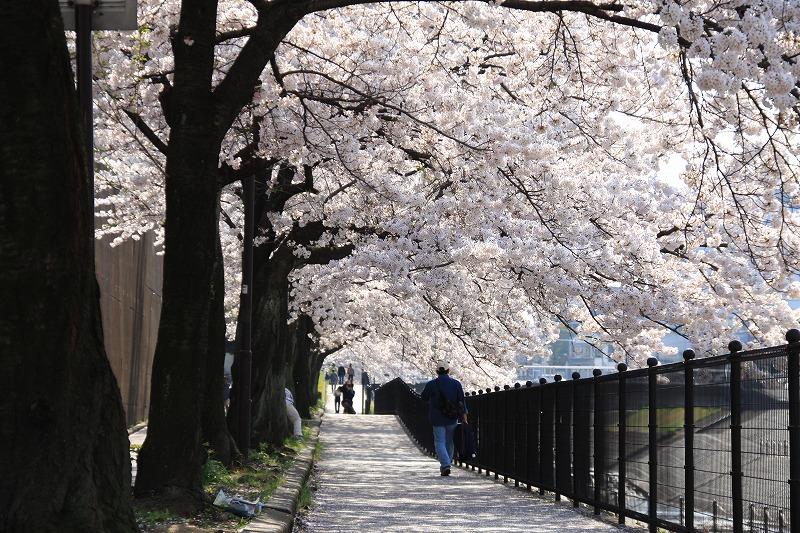 自宅周辺の桜を撮影