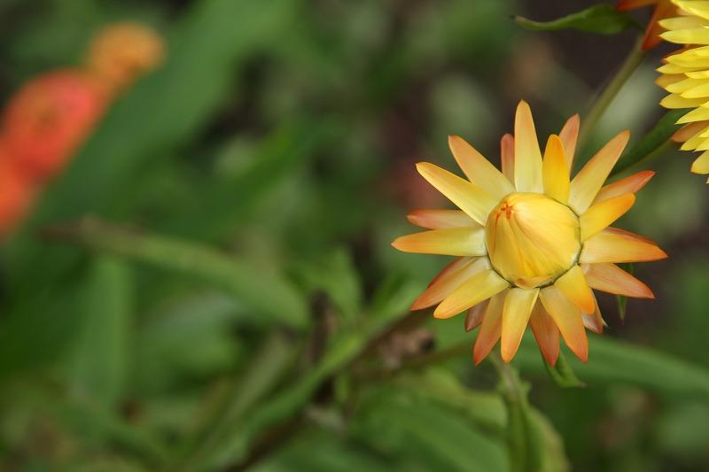 何の花ですかね・・・?