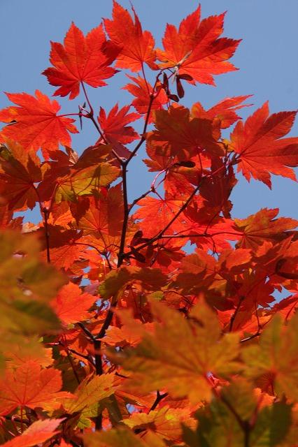 小樽の紅葉